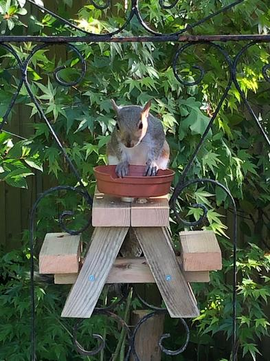 Vicky's squirrel table!