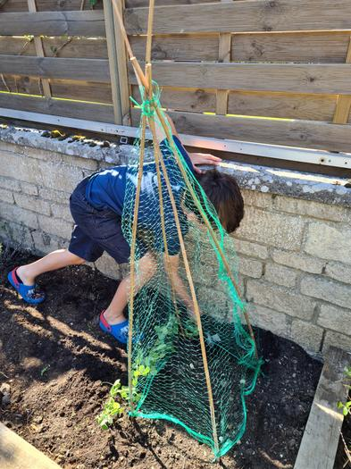 Elliot planting in the garden