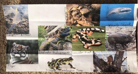 William found some pictures of endangered animals