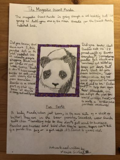 Xenia's fact poster about the magestic giant panda