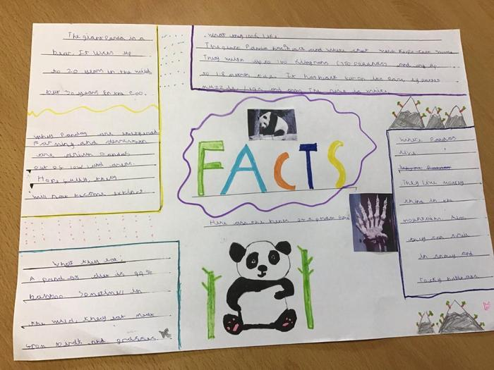Jacob's fact page about a giant panda