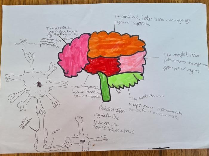 Elliot's brain research