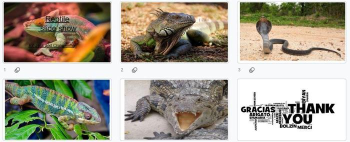 Jess created some slides about reptiles