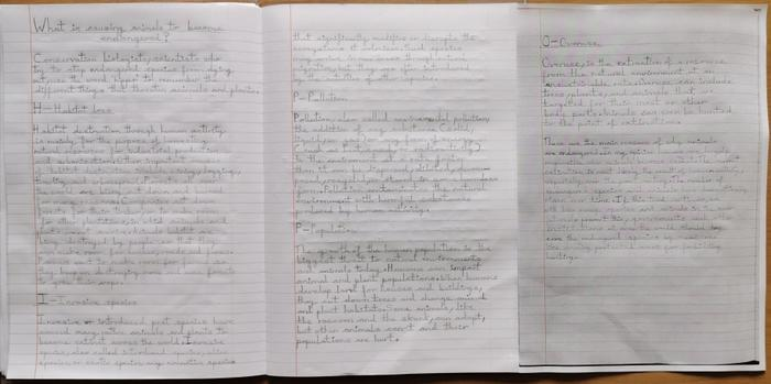 Oliwia's final piece of writing about 'HIPPO'!