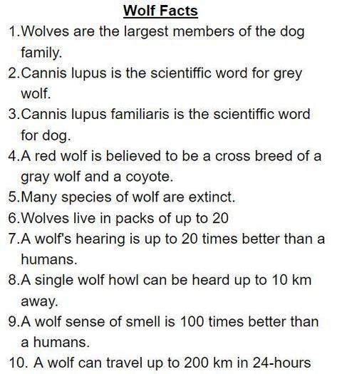 Zack wrote a fact page about wolves