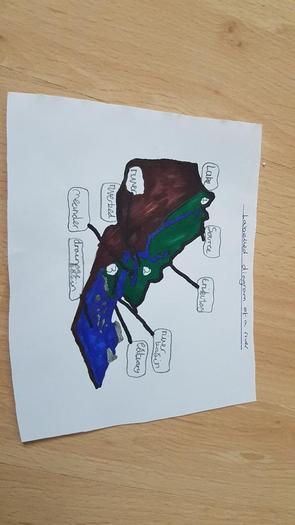Chloe's river diagram