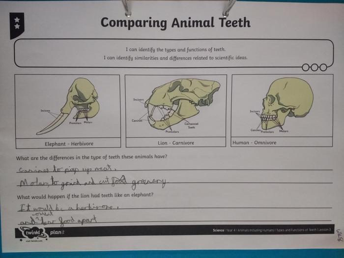 Oscar's teeth learning 1