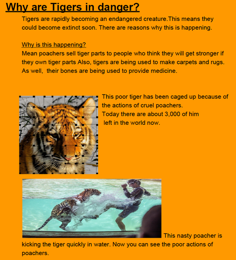 Elodie's research about why tigers are endangered