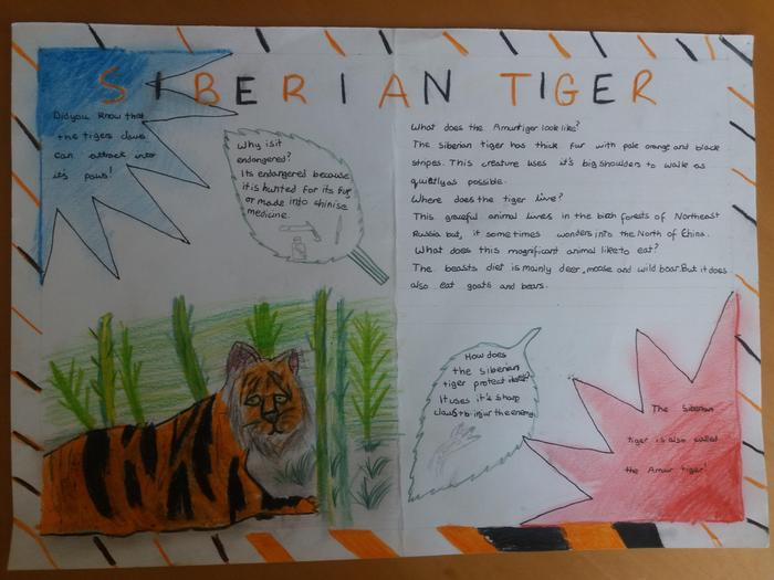 Emil's information page about the Siberian tiger