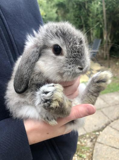 Henry S's very cute bunny rabbit