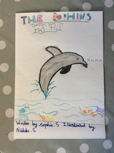 Sophie S's Dolphin Factfile 1