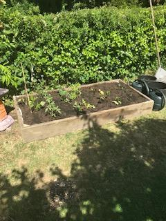 Ruby's very own vegetable patch