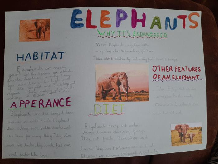 Lucas made an information page about elephants