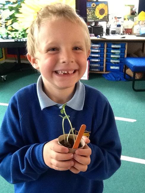 Growing a sunflower