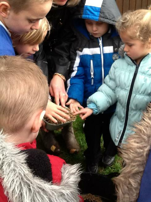 Brazil class teach us how to look after the sheep