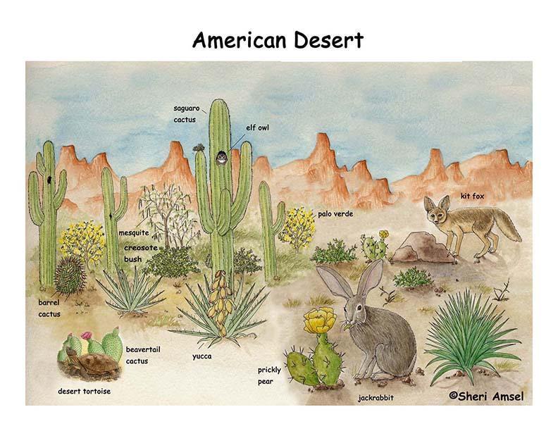 Comparing Deserts 1