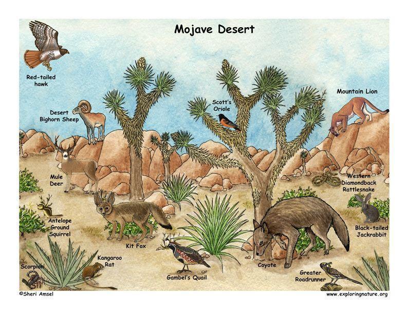 Comparing Deserts 2