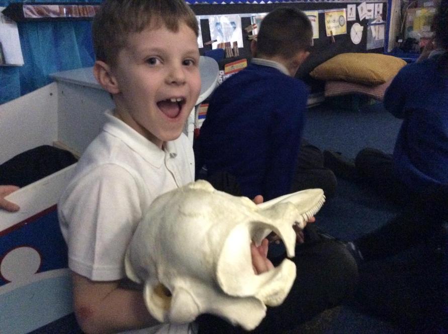 We enjoyed studying some model skulls.