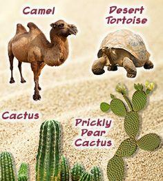The types of animals and plants found in deserts
