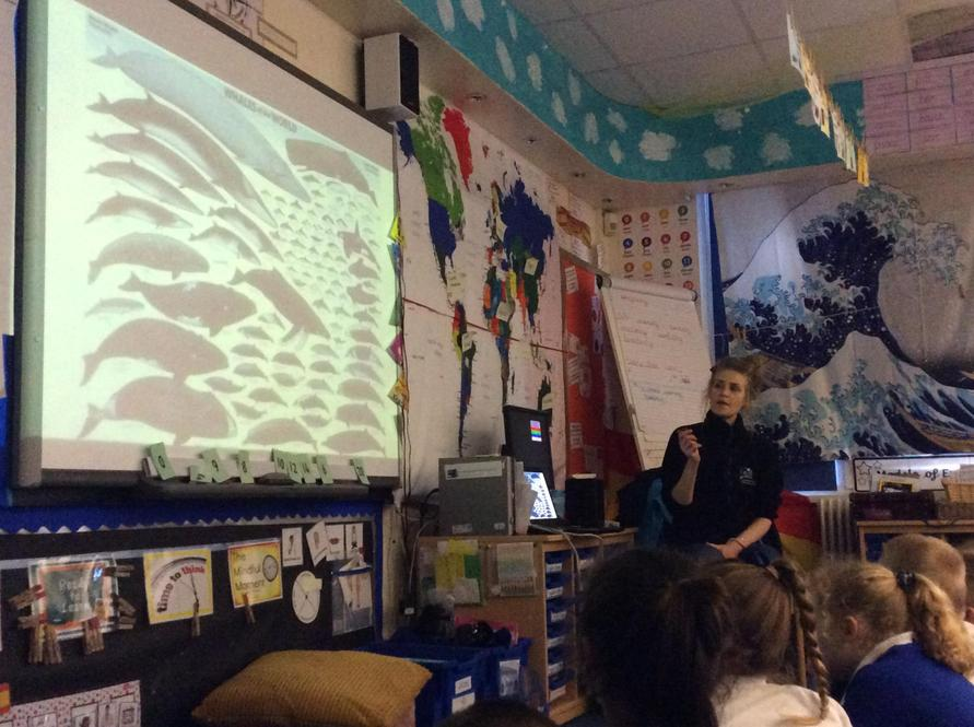 We learnt there are over 90 types of whale!