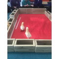 such as watching chicks hatch from eggs!