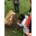 We explore creatures in our forest area.