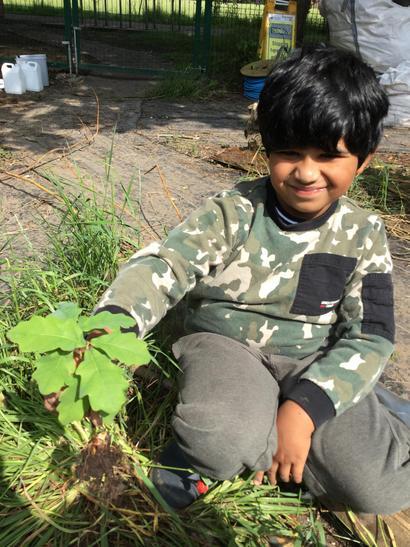 We planted some oak tree saplings.