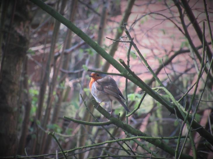 A robin spotted by Jackson