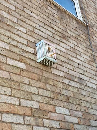 Maries bird house