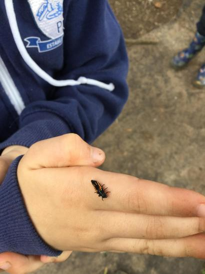 We learned about ladybird larvae.