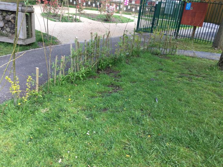 Willow hedge created in KS1 playground.