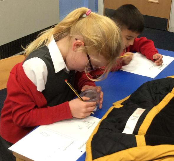 Drawing our minibeasts and noting habitats