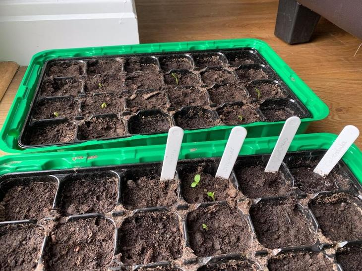 Mrs Thomas's seeds