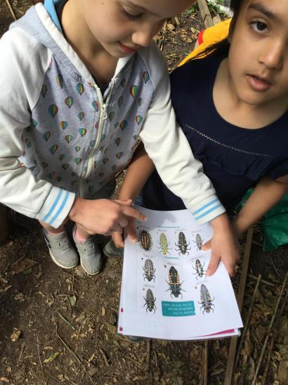 We identified different ladybird larvae.