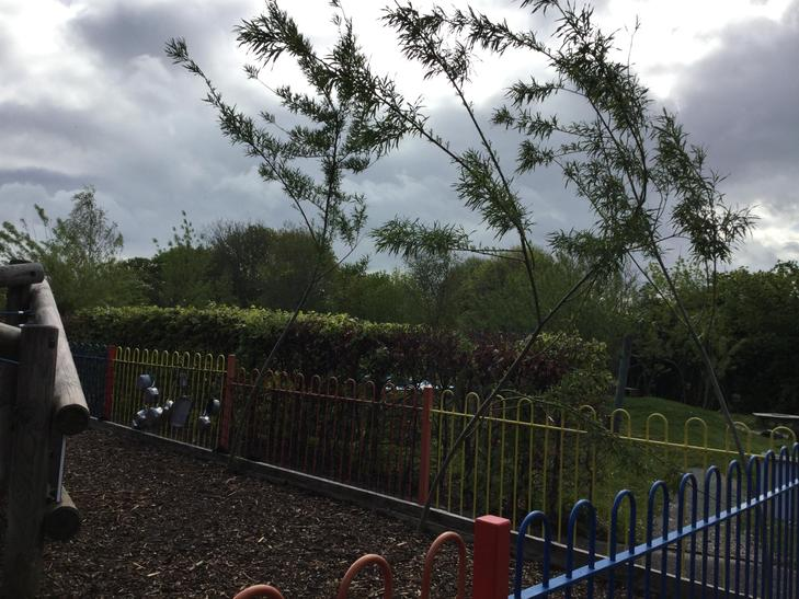 Trees planted in EYFS outdoor area.