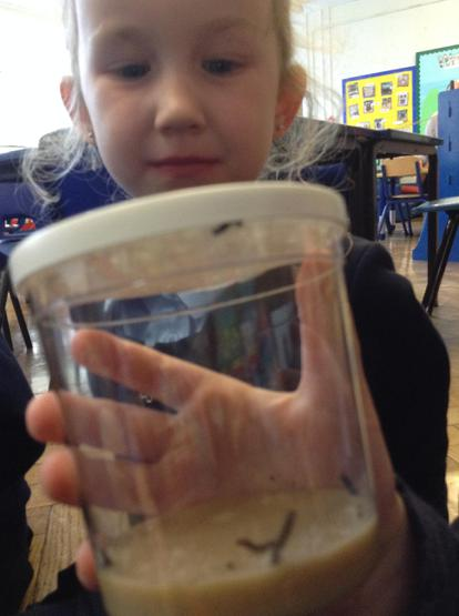 How our caterpillars were...