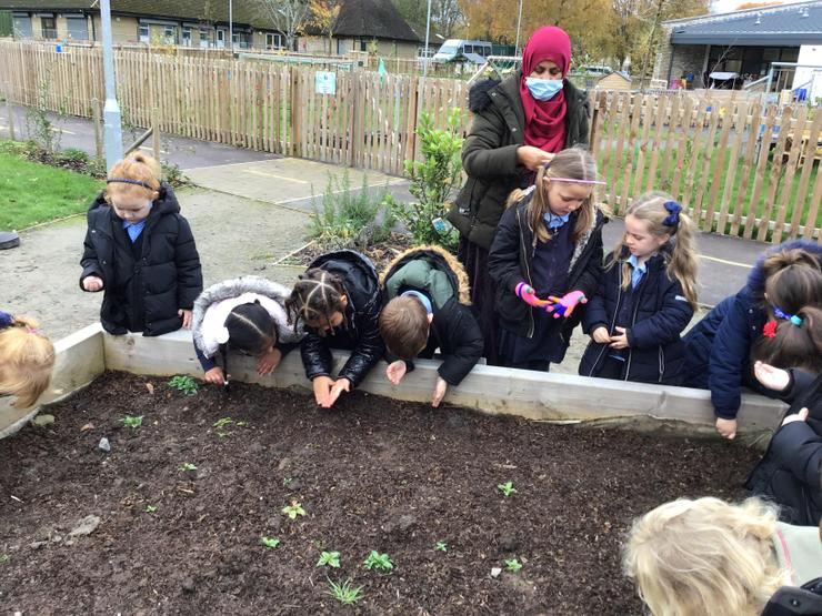 We are sowing poppy seeds.