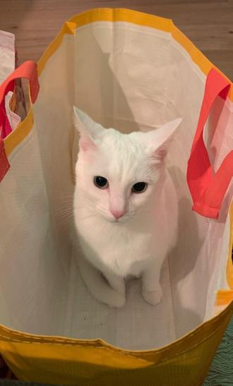 My cheeky cat is inside the shopping bag.