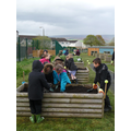 Planting up the raised beds - spring 2015