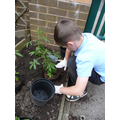 Planting up the borders at the front of school