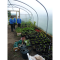 Starting to grow in the poly tunnel.