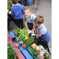 ECO club busy at work