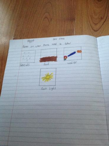 Science investigation by Prisha, Bulu