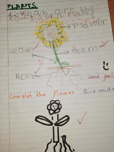 Science, Parts of a plant by Kevin, Bulu
