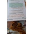 Faye's English work
