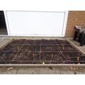 12 sunflower seeds planted!