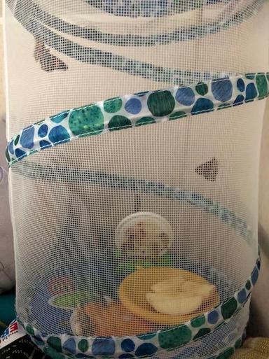 Butterflies read for release