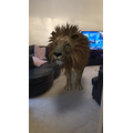 A lion came to visit