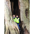 Sherwood Forest 2019