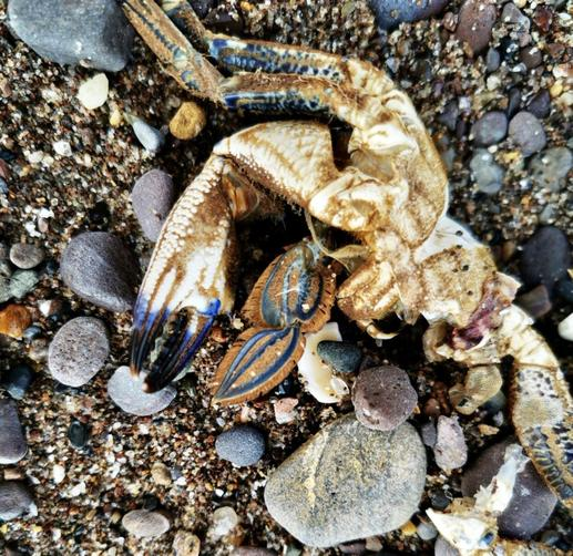 A Crab